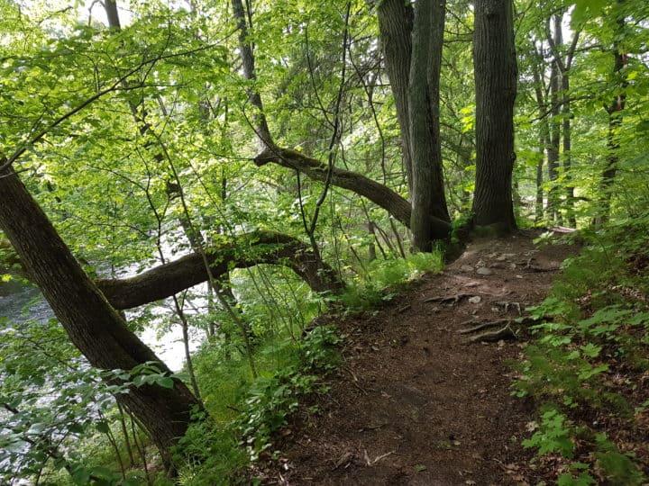 first ultra run trail